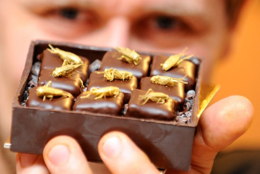 Francês mostras seus chocolates com insetos