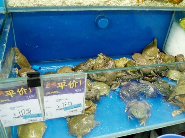 tartarugas e sapos