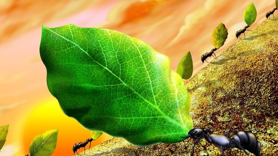 Formigas