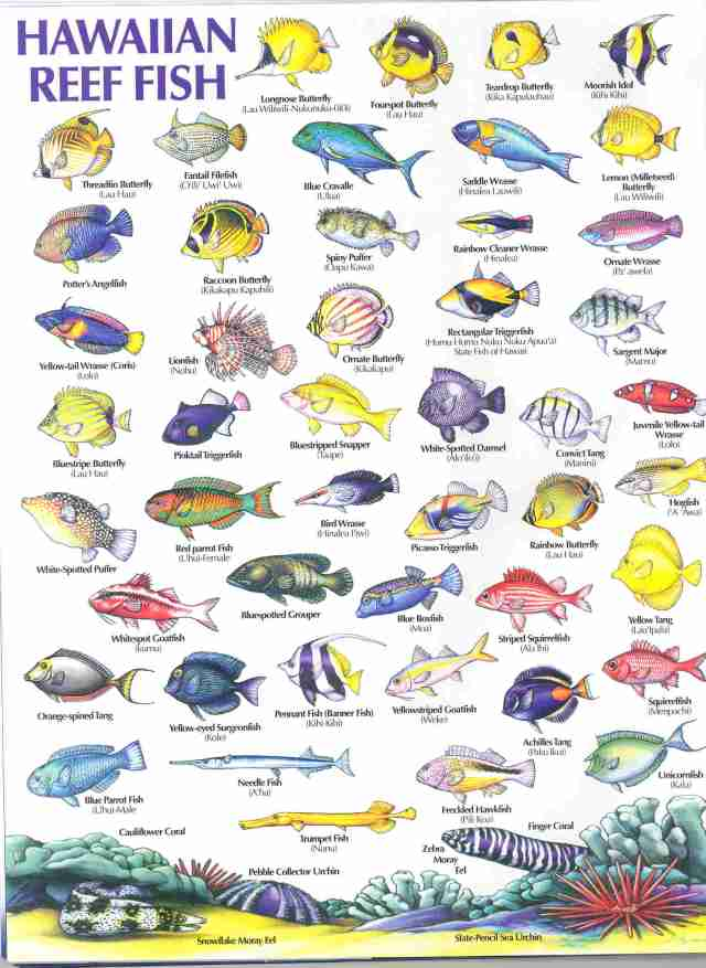 HAWAIIAN REEF FISH GUIDE   Types of fish, Hawaiian names