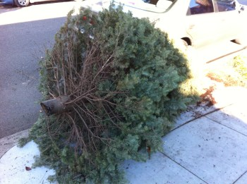 tree pickup (Action Alameda News)