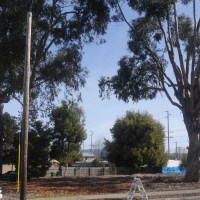 This stand of trees, including eucalyptus and an Oak, will be cut down to make way for the emergency operations center.