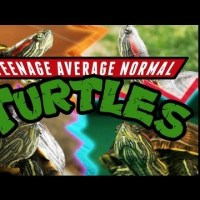 AFi Friday Fun – Teenage Average Normal Turtles