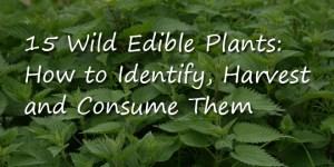 Wild-Edible-Plants-Logo-2