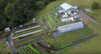 Urban Farmer Curtis Stone Teaches Profitable Backyard Farming