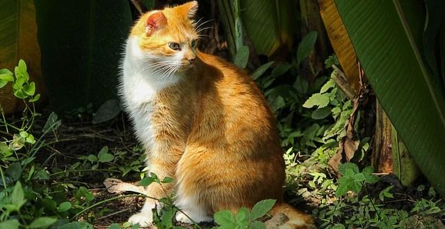 Qu plantas son t xicas para los gatos for Plantas toxicas gatos
