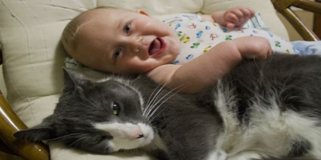 Los mejores gifs de gatos con bebés