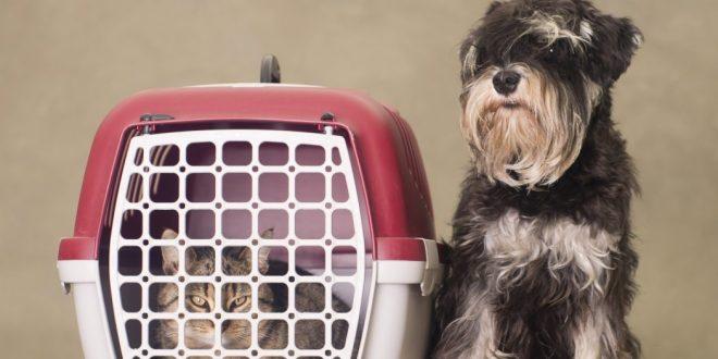Cómo elegir el mejor transportín para tu perro
