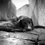animales abandonados