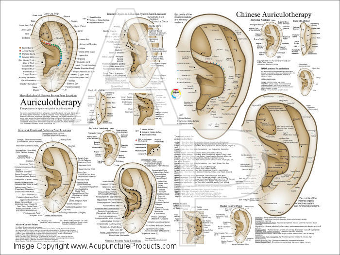 European Auriculotherapy Ear Acupuncture Poster