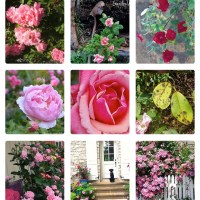 20 Breathtaking Roses {Curated Board for Hometalk}