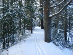 Paul Smith's VIC Ski Trail - Phil Brown photo