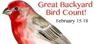 backyard bird count adirondacks still underrepresented the