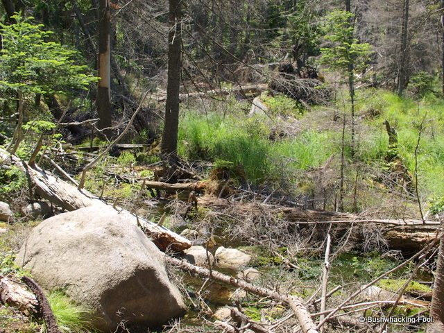 Wet blowdown near unnamed pond the adirondack almanack for Pond equipment near me