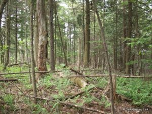 Adirondack wooded garden