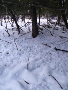 Deer Yarding Area