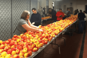 precision-apple-project-sensory-panel-members-evaluate-honeycrisp-apples-sampled-weekly-from-several-orchards-throughout-new-york-state