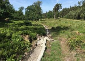 De droge Beek in de vallei van Landgoed Noorderheide; rechts de zandweg naar de piramide (foto: Ad Lansink)