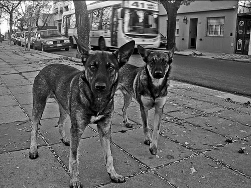 """27 de julio """"día internacional del perro callejero"""""""