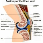 Is a Popping Knee a Sign of Torn Meniscus or Chiropractic Imbalance?