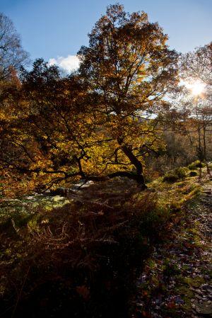 Autumn at Black Clough