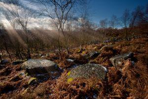 Millstone Forrest