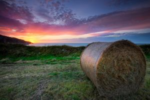 Hay Bales Sunset and Sea