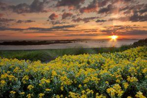 Rhosneigr Sunset Flowers