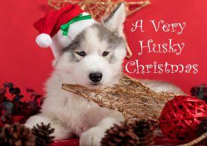 Husky-Christmas-Card-7.jpg