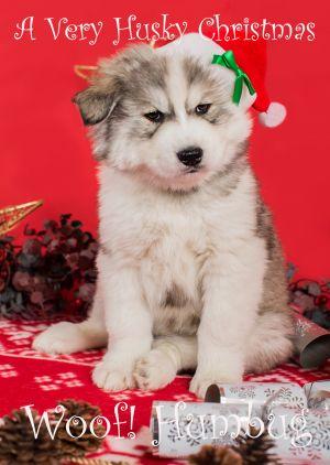Husky-Christmas-Card-8.jpg