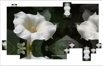 White Tango