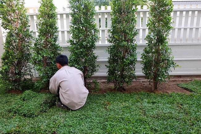 backyard, yard work planting tree and grass in garden - Advanced