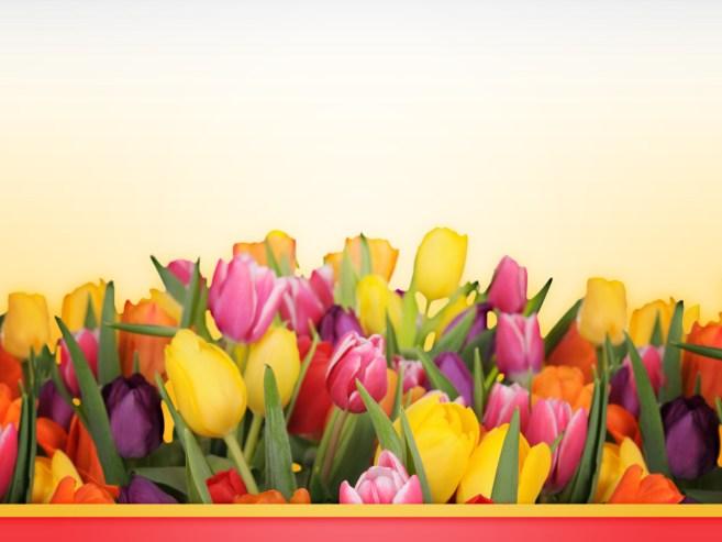 gefeliciteerd bloemen