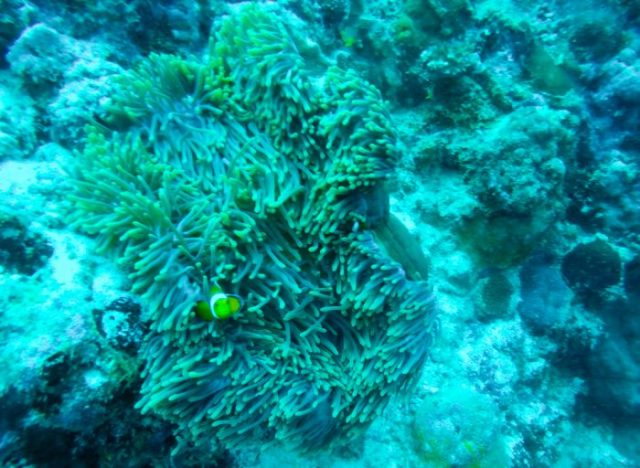 Advanced diver Philippines