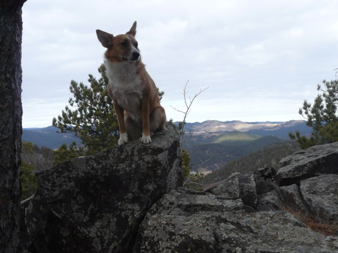 Lupe sits on top of the highest rock on Samelius Peak to claim her first peakbagging success of Black Hills, SD Expedition No. 110!