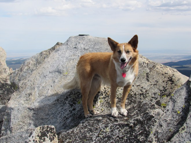 Lupe at the summit. Note the survey benchmark clearly visible on top of the boulder. Photo looks SE.