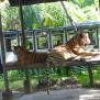 Bali-Safari-31 Bali Safari Park Hotel
