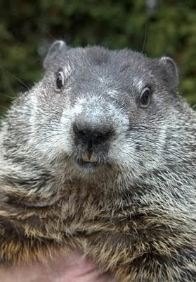 Happy GroundHog Day 2016 SO: did he see his shadow? #groundhogday