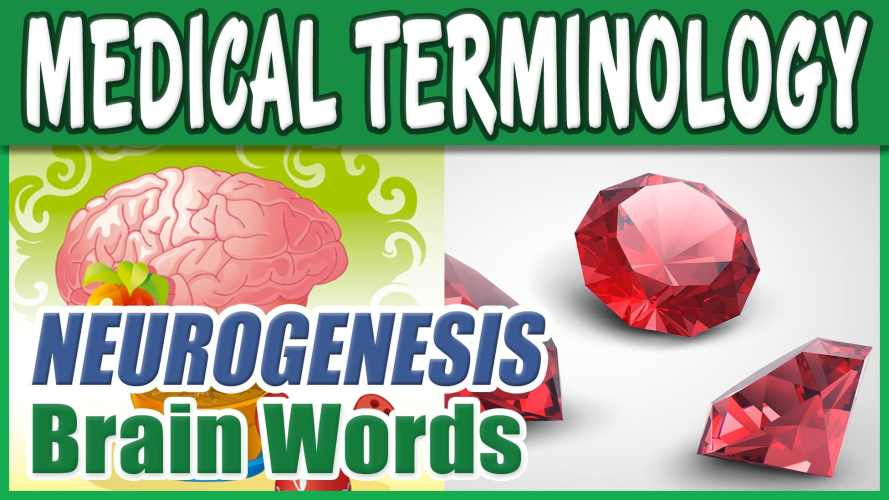 Medical Terminology – NEUROGENESIS