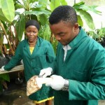 Call for Applications: CORAF/WECARD Empowering Youths for Agripreneurship in West Africa Project 2016