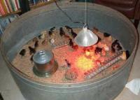 Raising Pheasants  Publications