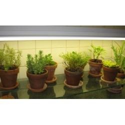Small Crop Of Indoor Vegetable Garden Setup