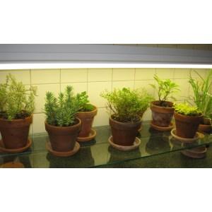 Fabulous Gardening Under Fluorescent Setups Culture Vegetable Grow Setup