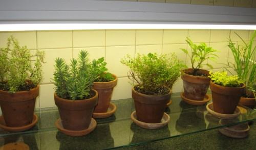 Medium Of Indoor Vegetable Garden Setup