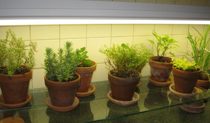 Large Of Indoor Vegetable Garden Setup