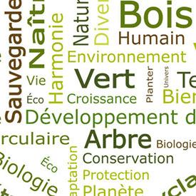Création du visuel d'Éco3Bois