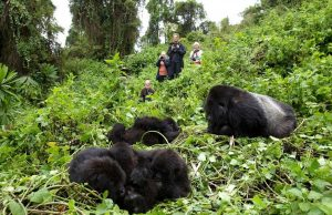 dasos me goriles sti Rwanda