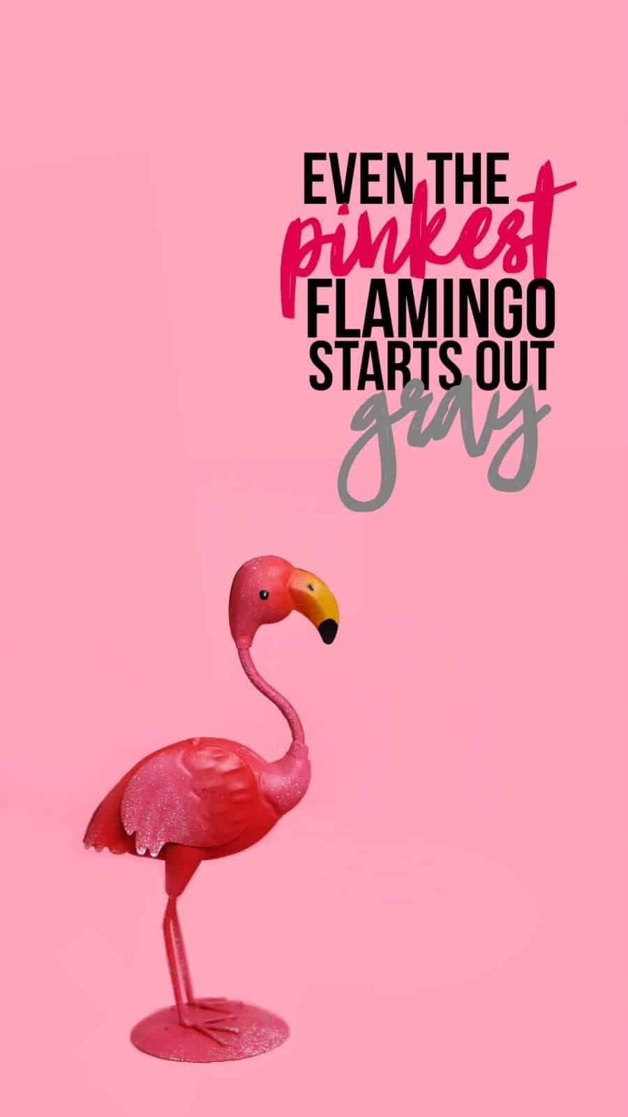 Make My Own Quote Wallpaper Flamingo Wallpaper For Your Phone A Girl And A Glue Gun