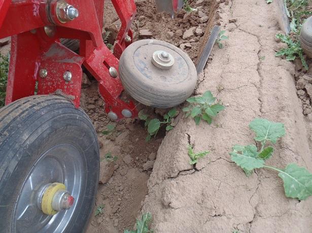 exemple de cv monde agricole