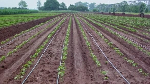 أهمية تعقيم التربة الزراعية